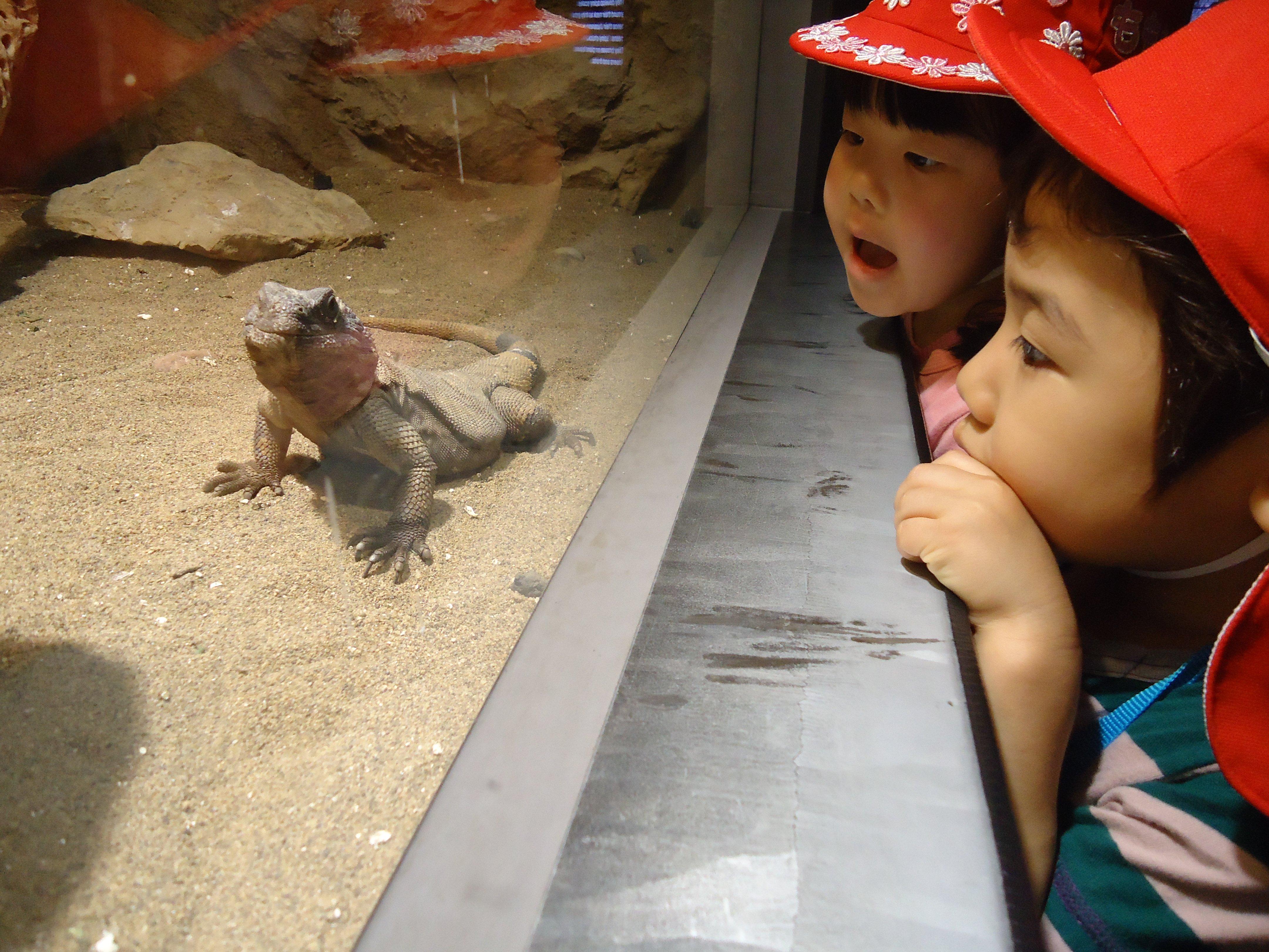 年長組 動物園遠足☆