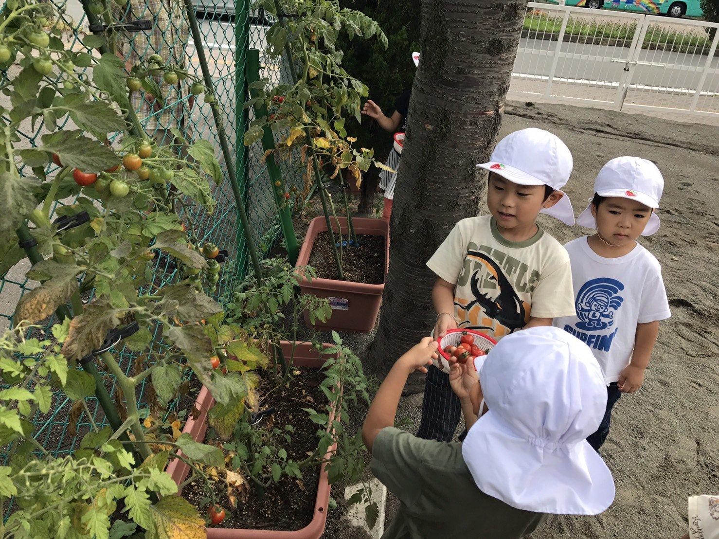 夏野菜収穫!!