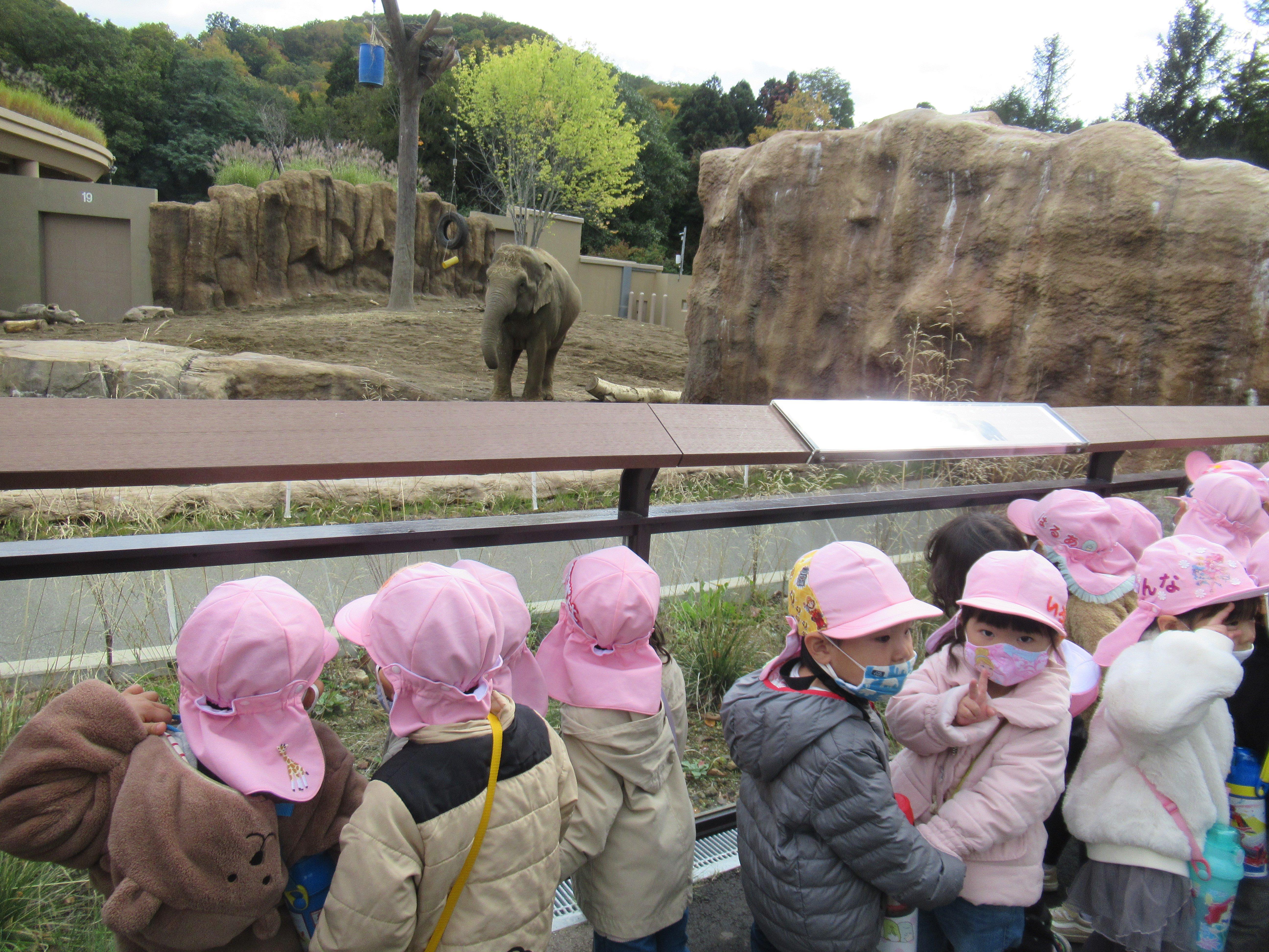 年少☆動物園